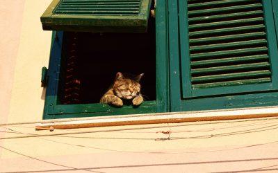 I giorni che non avremmo voluto conoscere e le nostre finestre